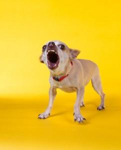 honden die niet veel blaffen