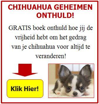 Chihuahua Geheimen Onthuld!